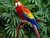 Tina777 - Vogelzüchter bei Birdrama