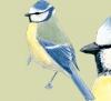 lisa-krugel - Vogelzüchter bei Birdrama