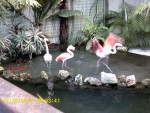 Flamant rose XD - (Andere)
