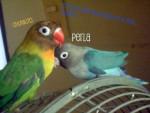 Perla y chunkito - (2 Jahre)